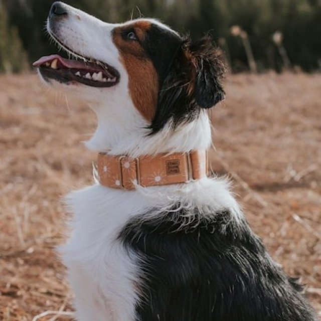 Two Dapper Pupz at iBusiness Directory Canada